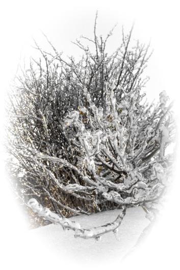 The icy tundra